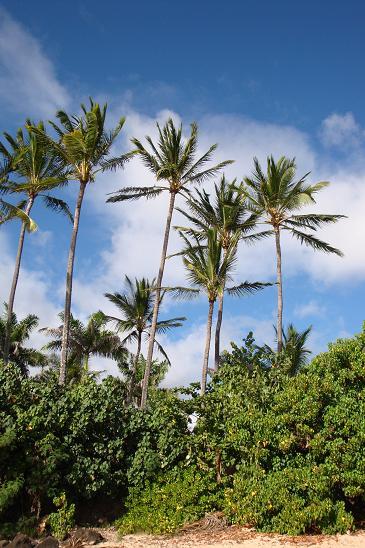 ハワイ10-21