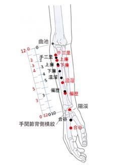 大腸経図1