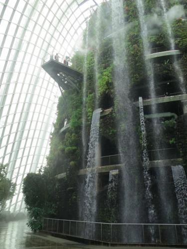 cloudforest1