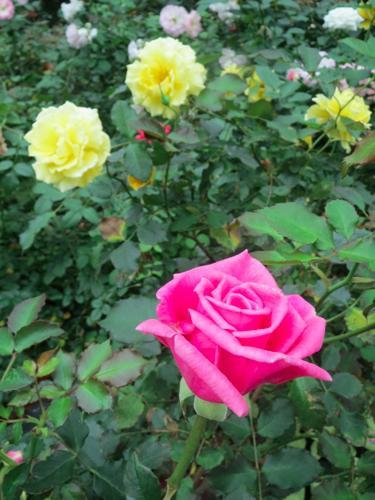 flowerdome6