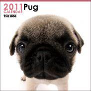 THE DOG 2011 CALENDAR Pug