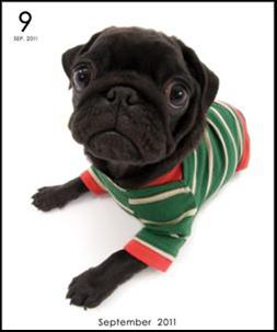 THE DOG カレンダー9月