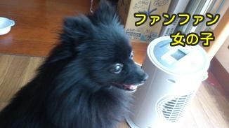 ファンファン&きららDSC_0404