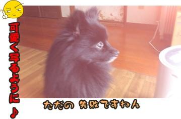 ファンファン&きららDSC_0408
