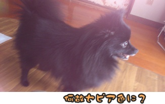 ファンファン&きららDSC_0398