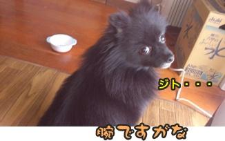 ファンファン&きららDSC_0395