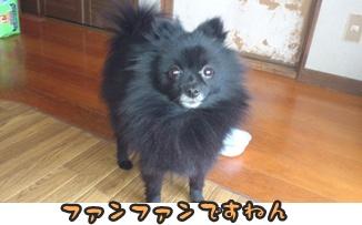 ファンファン&きららDSC_0389
