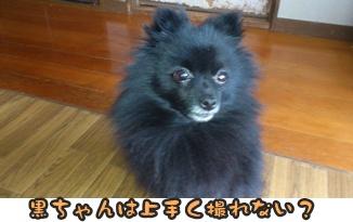 ファンファン&きららDSC_0391