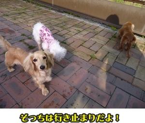 みる&どら041