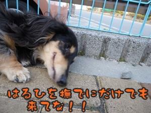 つみれトライアル新入生024