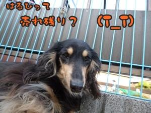 つみれトライアル新入生021