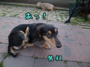 つみれトライアル新入生026