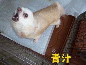 犬恋文譲渡会022