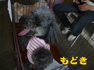 犬恋文譲渡会020