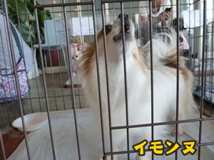 犬恋文譲渡会006