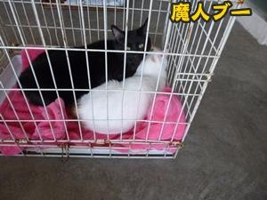 犬恋文譲渡会018