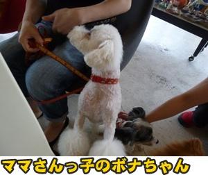 犬恋文譲渡会026
