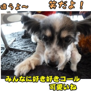 犬恋文譲渡会028