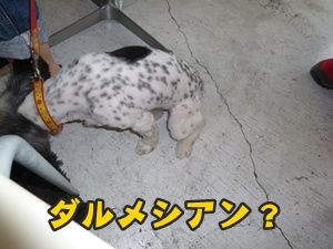 犬恋文譲渡会027