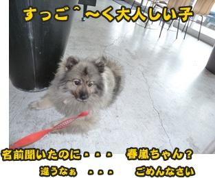 犬恋文譲渡会003
