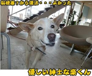 犬恋文譲渡会002
