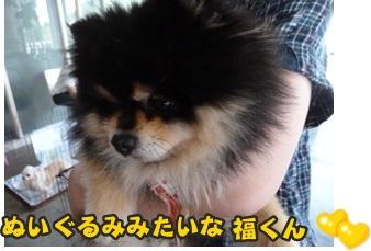 犬恋文譲渡会001