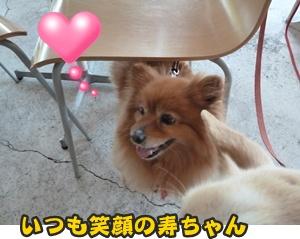 犬恋文譲渡会004