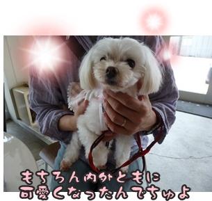 犬恋文譲渡会025