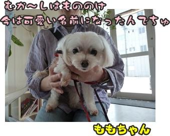 犬恋文譲渡会024