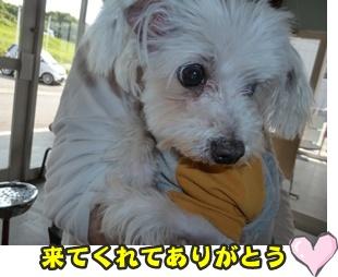 犬恋文譲渡会031