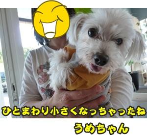 犬恋文譲渡会032