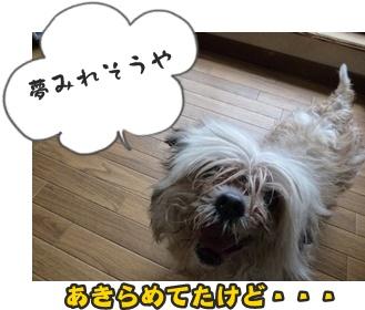 つみれトライアル新入生156