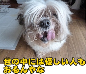 つみれトライアル新入生151