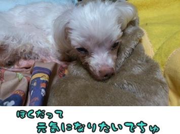 ぴあのストップDSC_0607