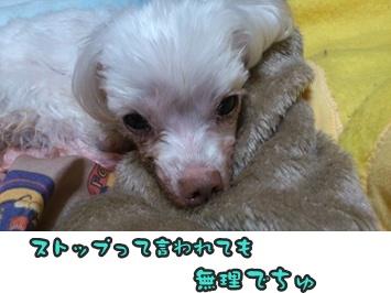 ぴあのストップDSC_0608