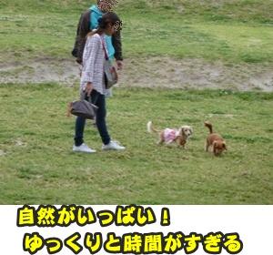 つみれトライアル新入生106