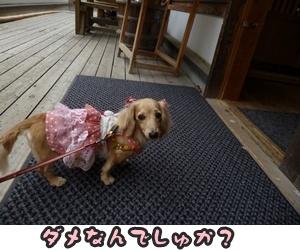 つみれトライアル新入生102