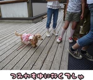 つみれトライアル新入生100
