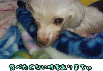 ぴあくんDSC_0623