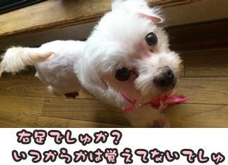 もさSDSC_0550