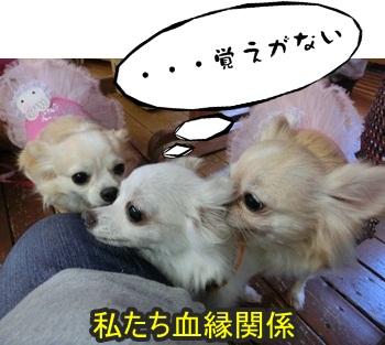 ともnet譲渡会092