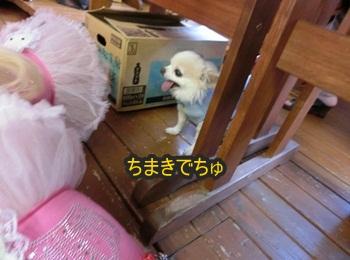 ともnet譲渡会087