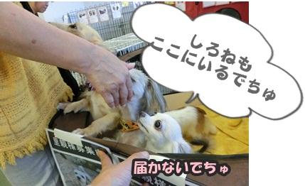 ともnet譲渡会041