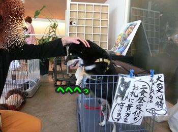 犬恋文譲渡会10.12085