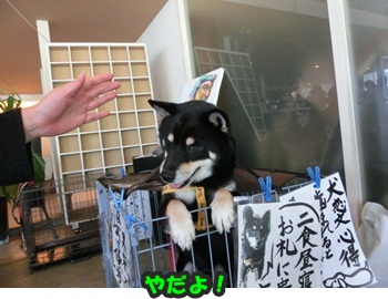 犬恋文譲渡会10.12083