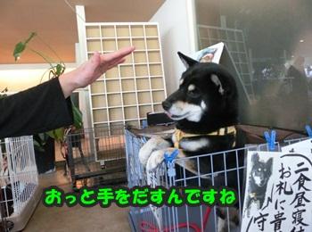 犬恋文譲渡会10.12082