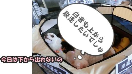 犬恋文譲渡会10.12058