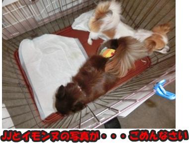 犬恋文譲渡会10.12016