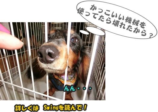 犬恋文譲渡会10.12021