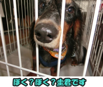 犬恋文譲渡会10.12019